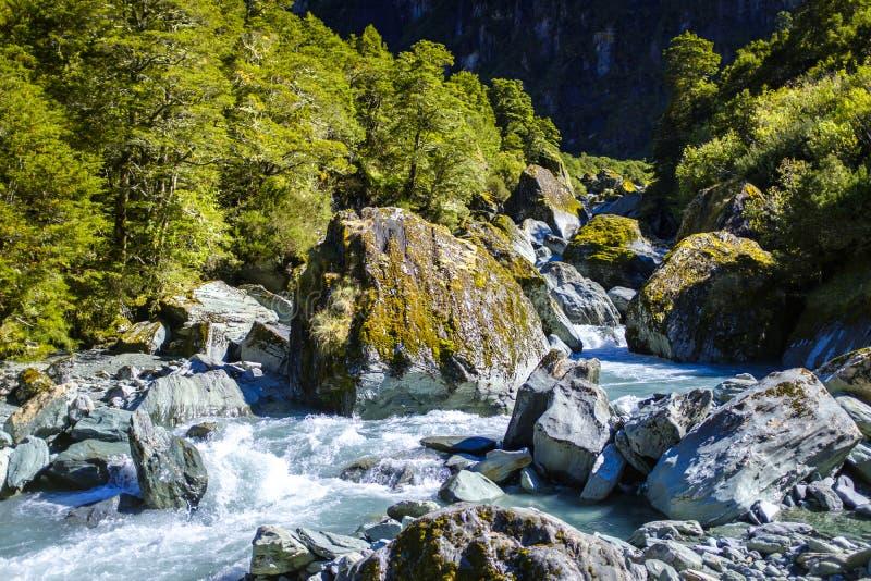 Красивый дикий поток в Новой Зеландии стоковая фотография rf