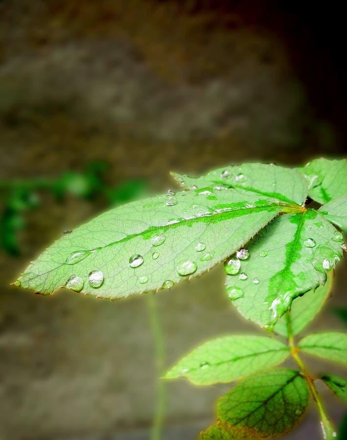 Красивый дождливый день и красивые падения воды на лист стоковое изображение rf