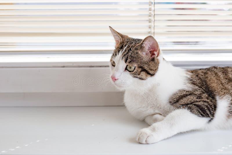 Красивый домашний кот смотрит перед им и лежащ на силле окна, месте для текста стоковое изображение