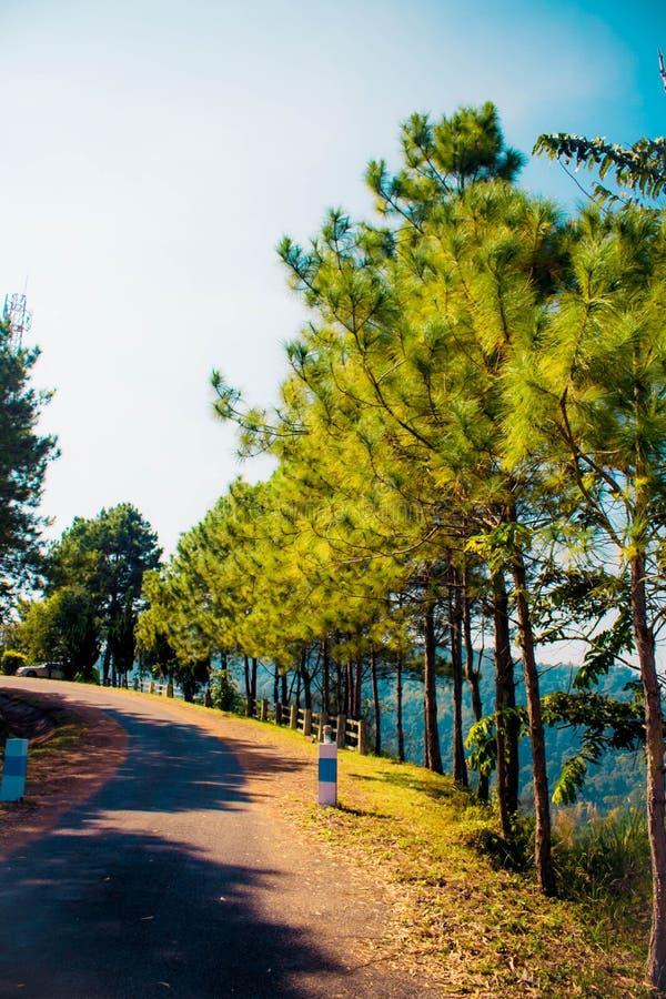 Красивый леса стоковое изображение rf