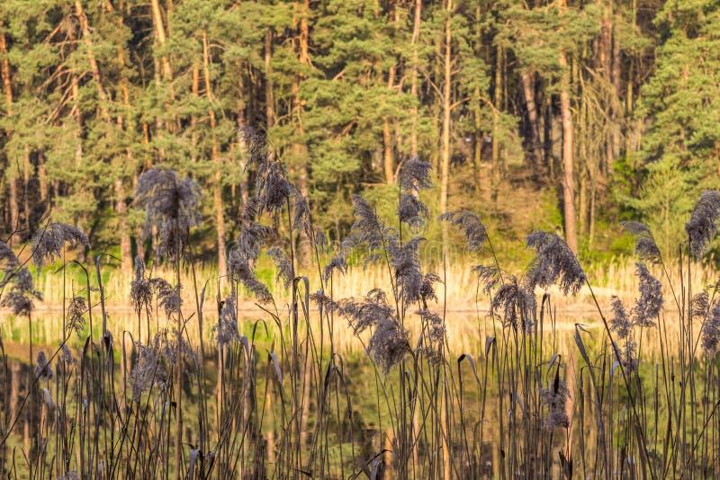 Красивый естественный пейзаж стоковые фотографии rf