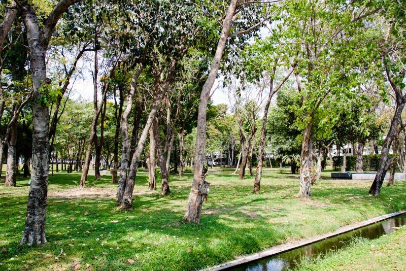 Красивый естественный сад украшает взгляд стоковое изображение rf