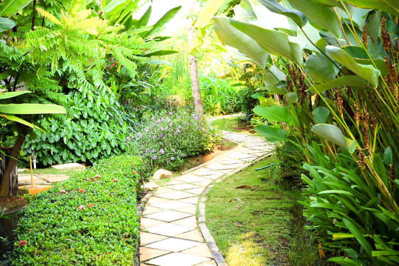Красивый естественный сад и идя пути стоковые изображения rf