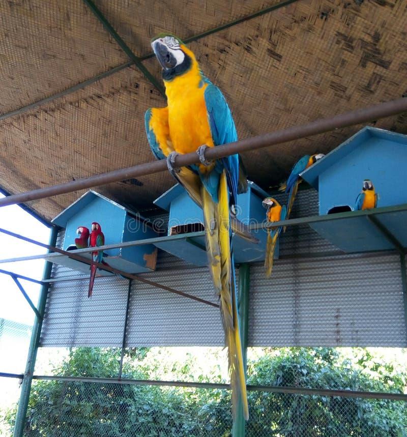 Красивый желтый попугай стоковое изображение