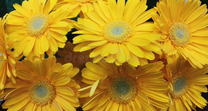 Красивый желтый gerbera в букете i стоковое фото rf