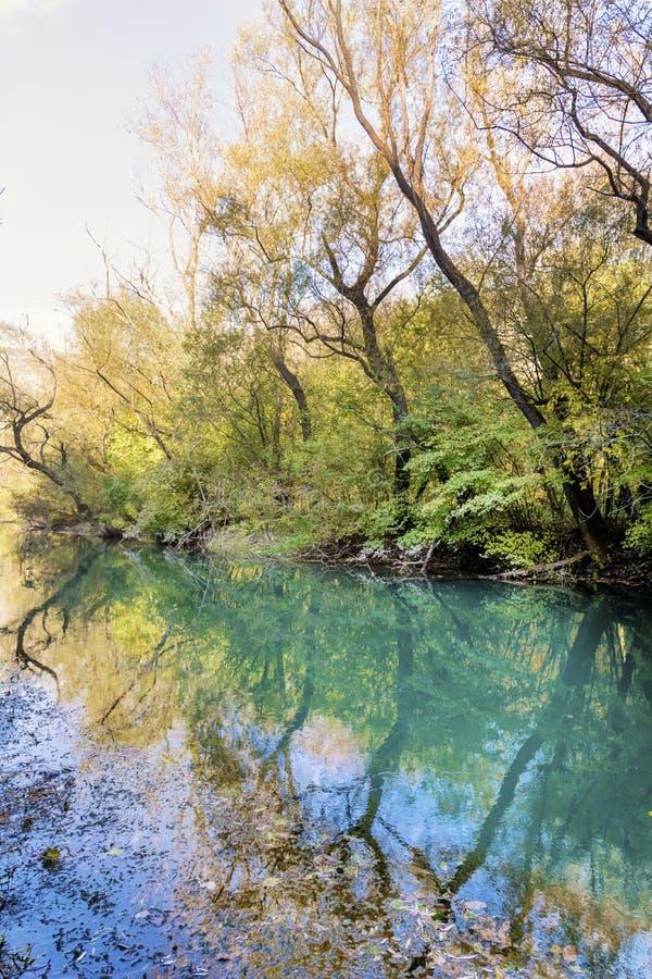 Красивый живописный ландшафт Green River и деревьев в горе стоковые изображения rf