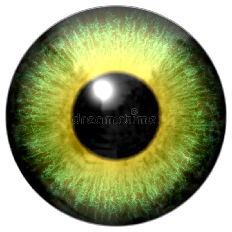 Красивый животный зрачок аллигатора хищника желтого зеленого цвета иллюстрация штока