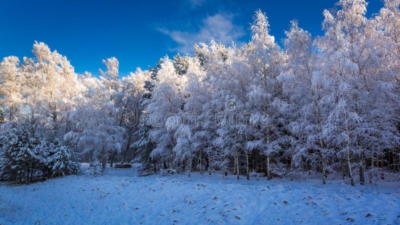 Красивый замороженный лес в зиме стоковое фото rf
