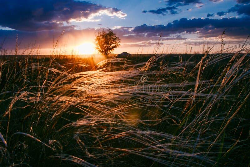 Красивый заход солнца в лете, голубых облаках и золотой траве стоковые фото