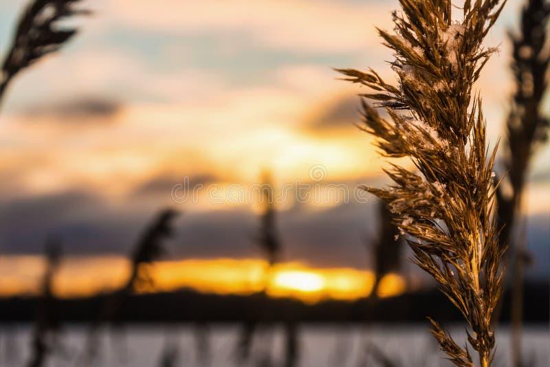 Красивый заход солнца зимы над озером стоковые изображения rf