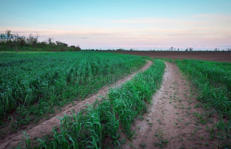 Красивый заход солнца и дорога в зеленых полях стоковое изображение