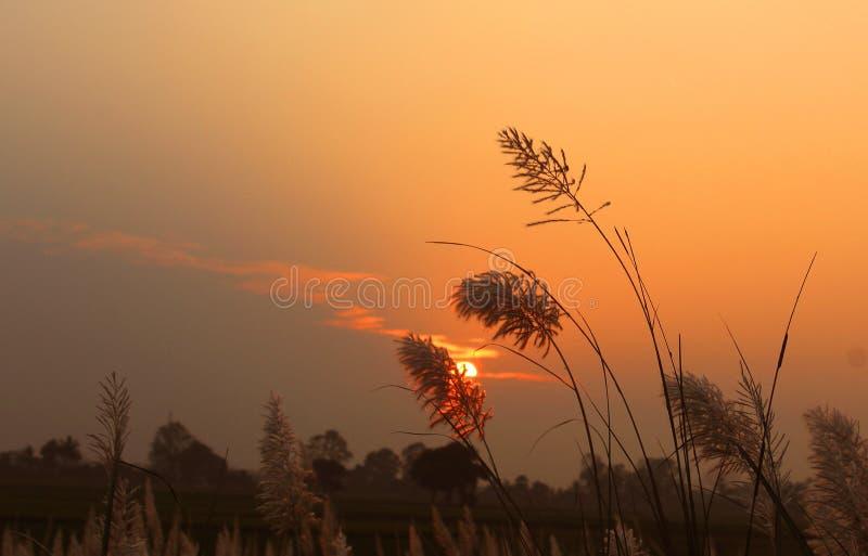 Красивый заход солнца с тростниками стоковые фото