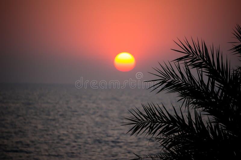 Красивый заход солнца на море в тропической стране Солнце светит через листья пальмы стоковое изображение rf