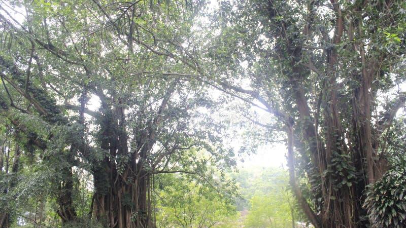 Красивый зеленый лес на Индонезии стоковая фотография