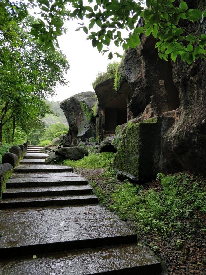 Красивый зеленый лес на пещерах Kanheri стоковые изображения rf