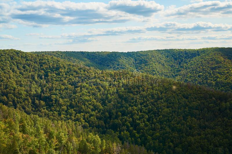 Красивый зеленый лес против голубого неба с облаками Природный парк стоковые изображения rf