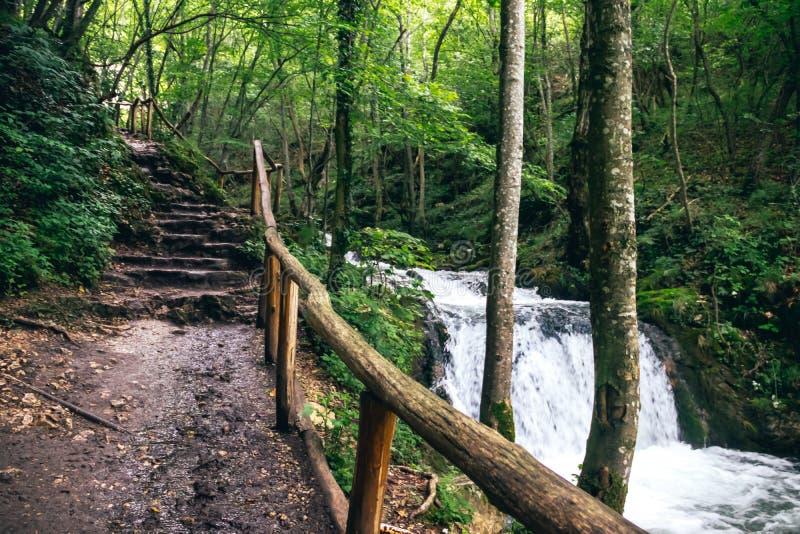 Красивый зеленый лес с небольшой заводью и путь для идти стоковое фото