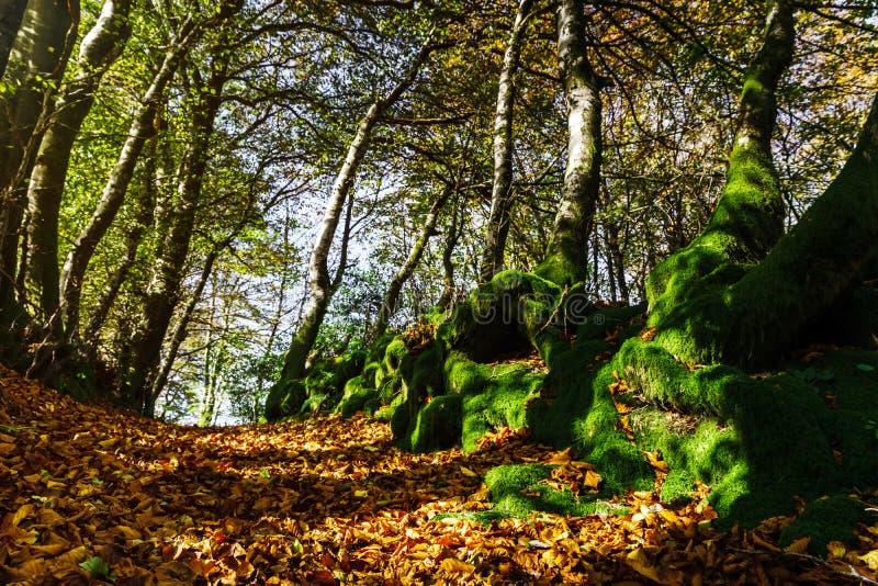 Красивый зеленый мох в осенних лесе, солнце и тенях, natura стоковое изображение rf