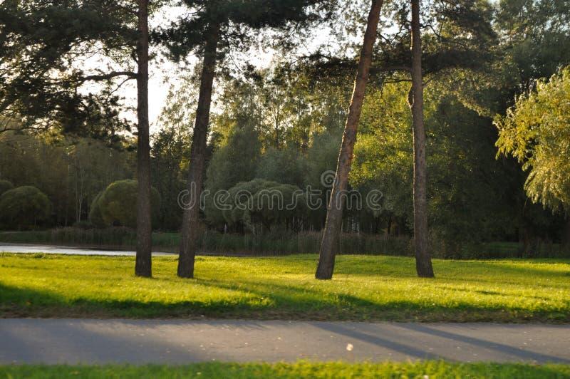 Красивый зеленый парк на солнечный день стоковые изображения