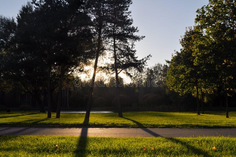 Красивый зеленый парк на солнечный день стоковое изображение rf