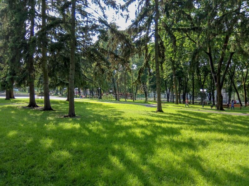 Красивый зеленый парк с зеленой травой и деревьями стоковые фото