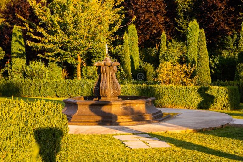 Красивый зеленый сад стоковые фотографии rf