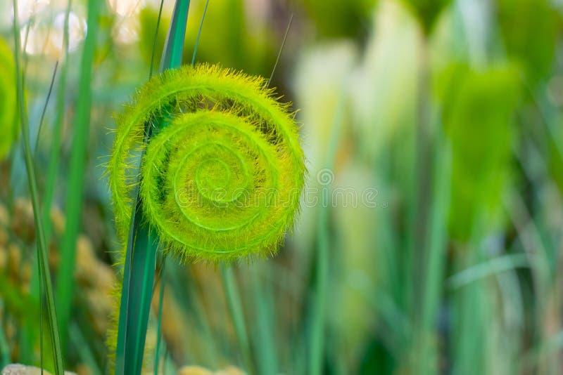 Красивый зеленый уголок искусственного растения, пушистая ветвь полиэфирного ферна Абстрактный фоновый фоновый фоновый фоновый фо стоковые изображения