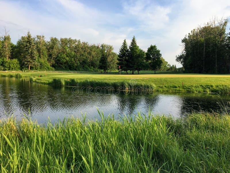 Красивый зеленый цвет гольфа окруженный водой на красивый солнечный летний день Деревья на заднем плане отражают стоковые фотографии rf