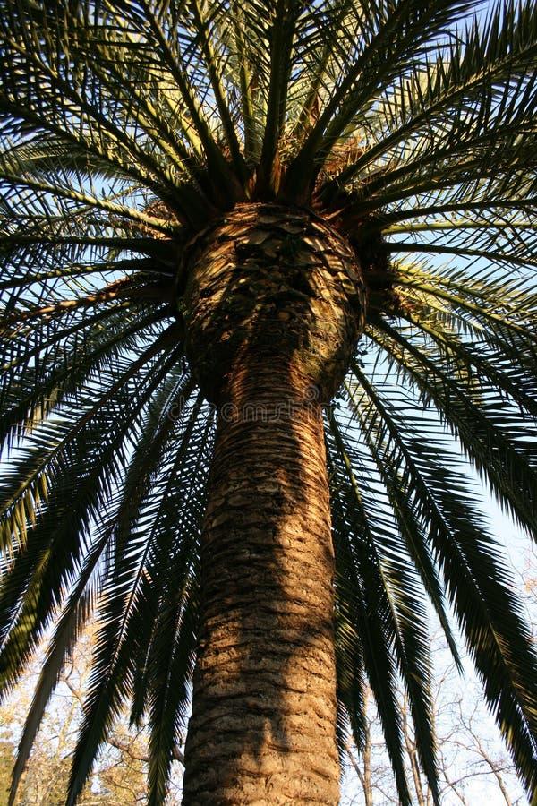 Красивый зеленый парк пальмы публично, Валенсия, Испания стоковые изображения
