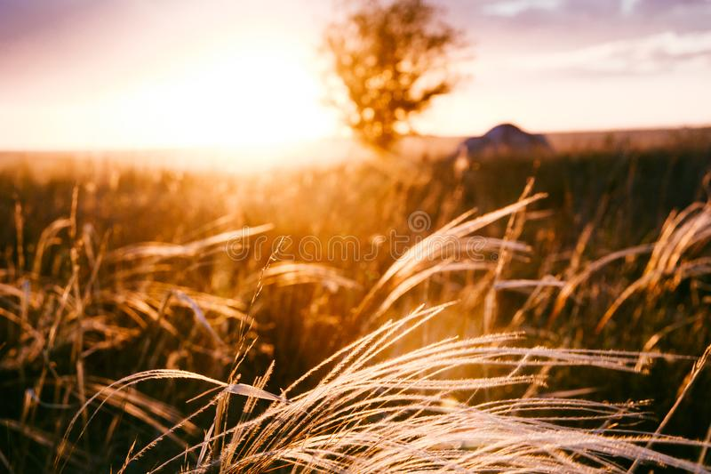 Красивый золотой заход солнца в naturre стоковые изображения