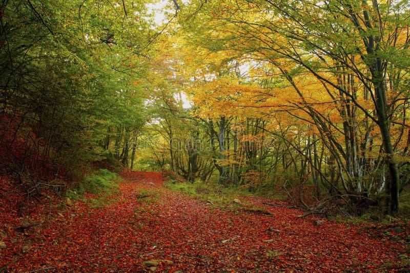 Красивый золотой ландшафт осени стоковое изображение rf