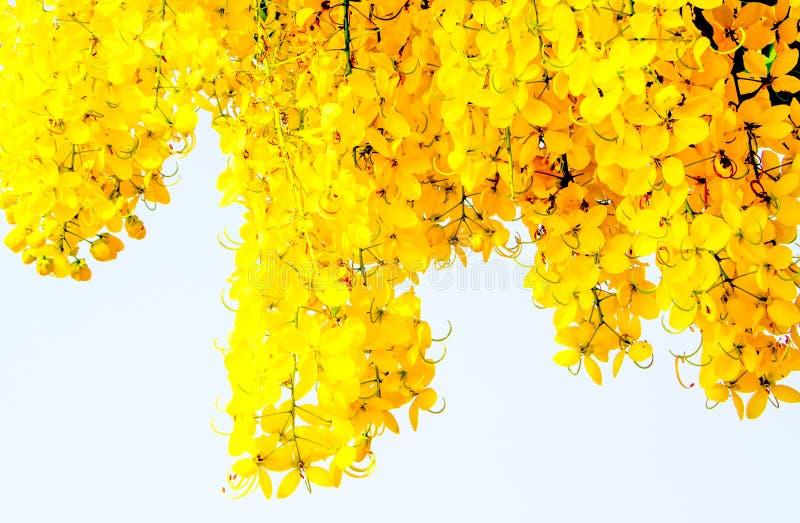 Download Красивый золотой ливень стоковое изображение. изображение насчитывающей сливк - 40589775
