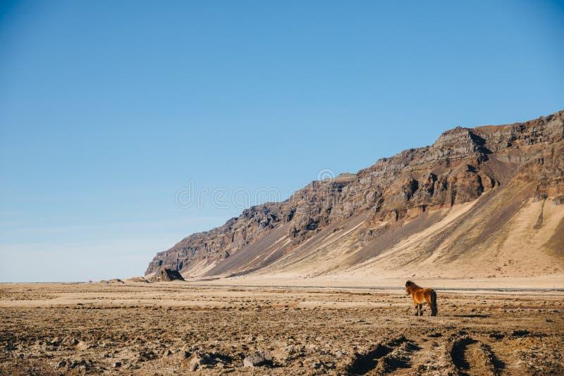 красивый исландский ландшафт с коричневой лошадью и скалистыми холмами на солнечном дне, стоковое изображение rf