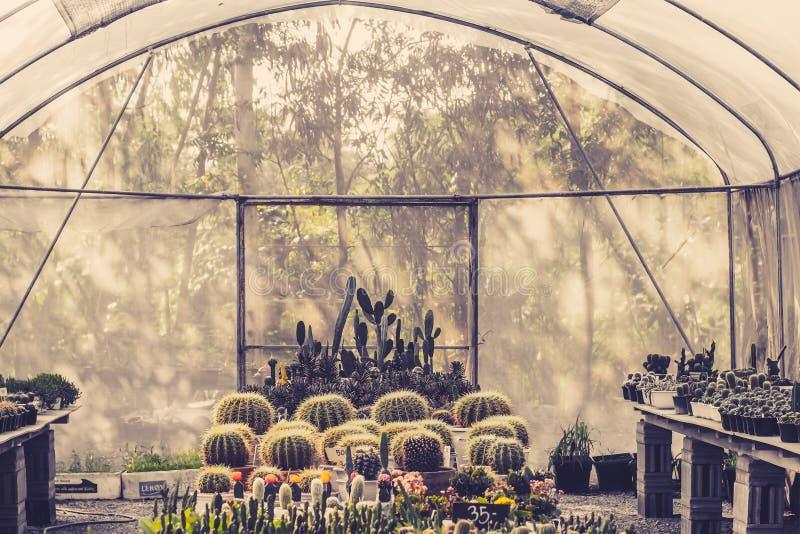 Красивый кактус в комнатном растении для питомника стоковые изображения