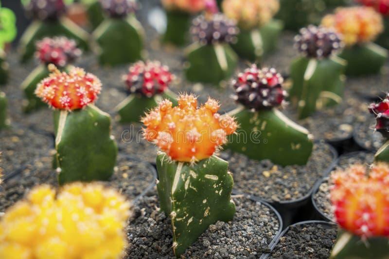 Красивый кактус цветка с другими цветами стоковые фотографии rf