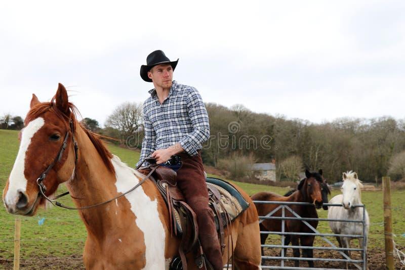 Красивый ковбой на лошади с лошадями на заднем плане стоковая фотография rf