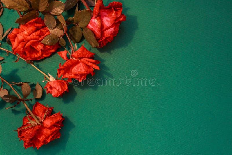 Красивый конец-вверх красных роз на зеленой предпосылке Конец-вверх роз стоковые фотографии rf