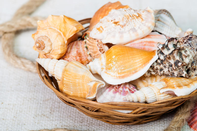 Красивый конец-вверх seashells в корзине стоковое изображение rf