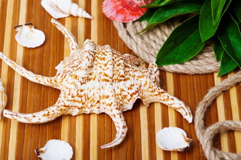 Красивый конец-вверх seashells стоковое фото rf
