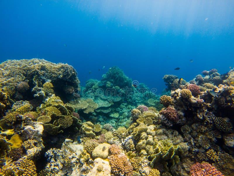 Красивый коралловый риф и тропические рыбы подводные, морская флора и фауна стоковая фотография rf