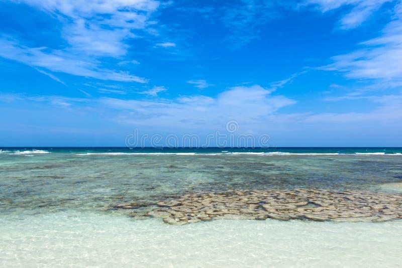 Красивый коралл около тропического пляжа на пляже свободы, животиках Koh стоковые фото