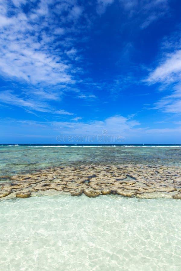 Красивый коралл около тропического пляжа на пляже свободы, животиках Koh стоковые изображения