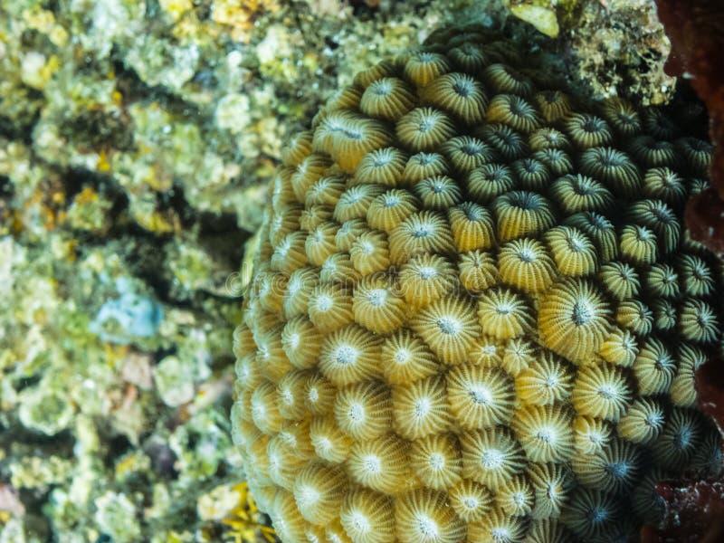 Красивый коралл в море стоковая фотография rf