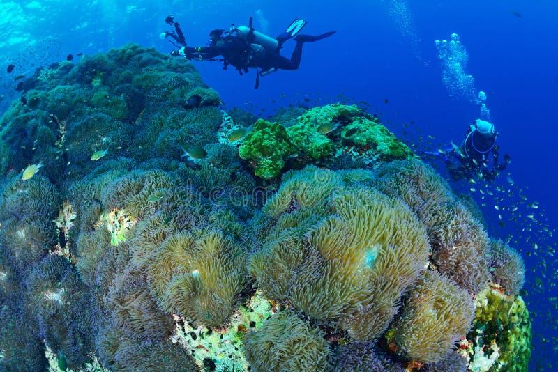 Красивый коралловый риф в национальном парке Chumporn, Таиланде стоковые фотографии rf