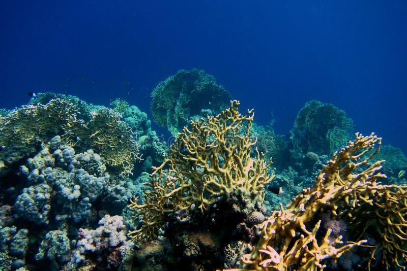 Красивый коралл стоковые фото