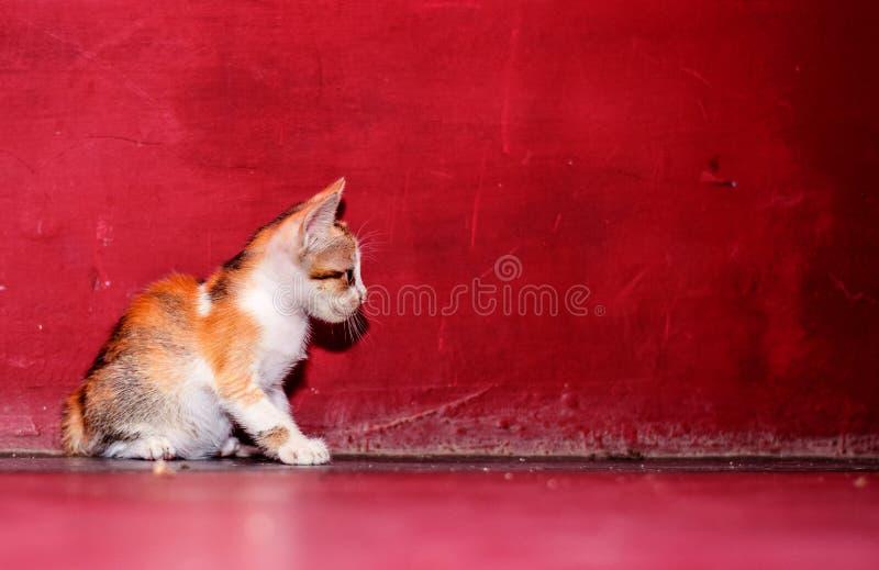 Красивый котенок усаживает на пол стоковое изображение