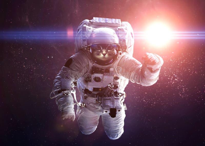 Красивый кот в космическом пространстве Элементы этого стоковая фотография rf