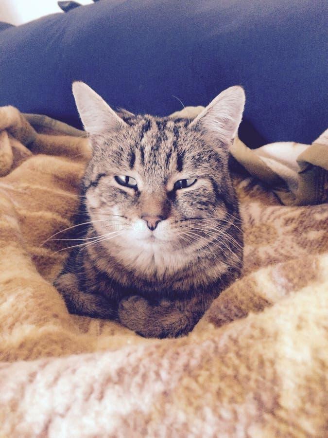 красивый кот на теплом одеяле стоковое изображение rf