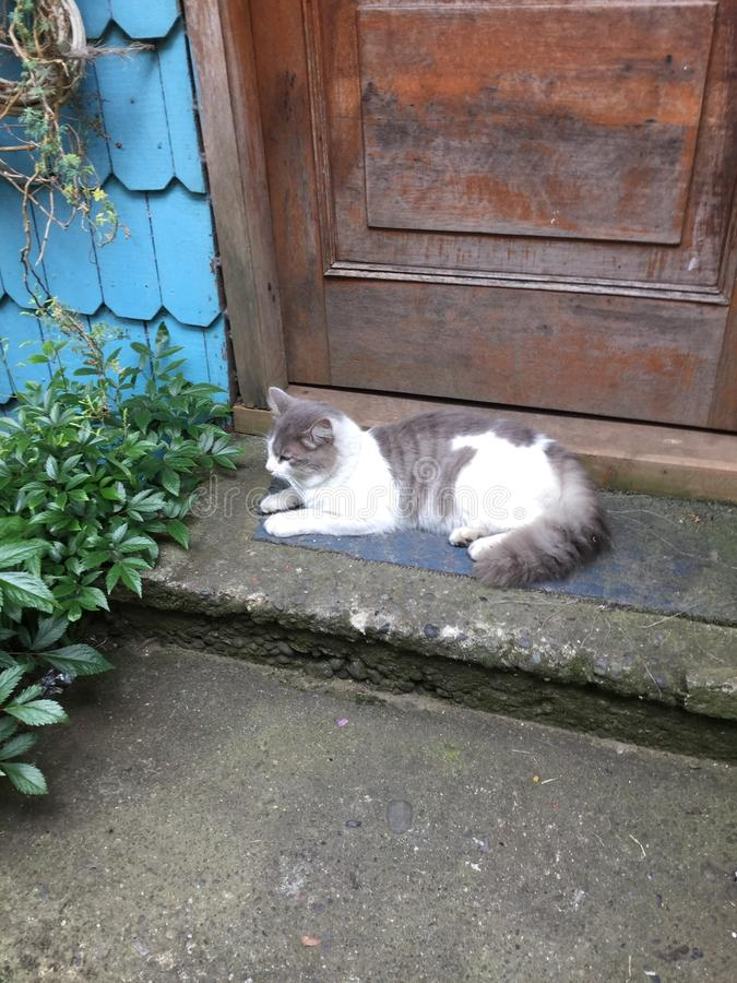 Красивый кот отдыхая outdoors в лете стоковое фото rf