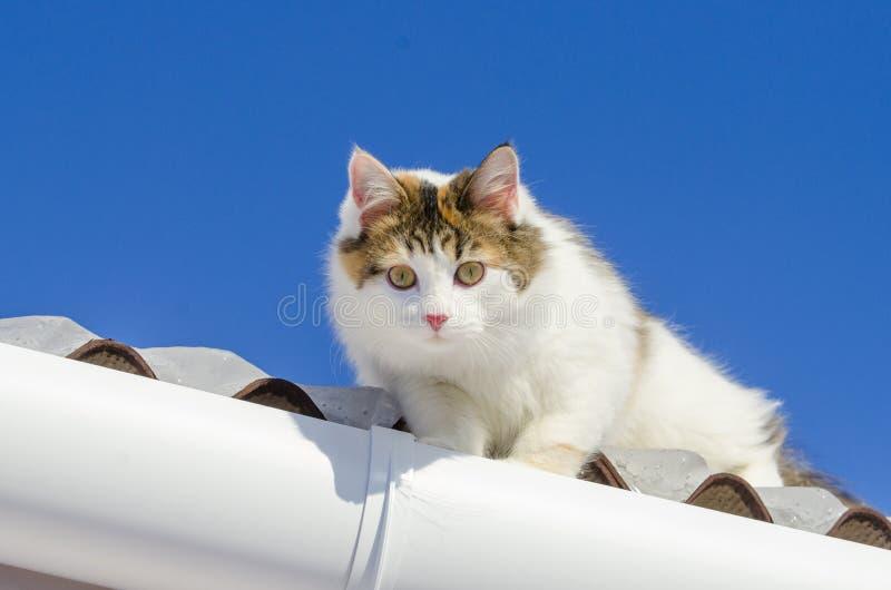 Красивый кот ситца идя на снежную крышу киски дома сидя на верхней части крыши на солнечное Рождество Смотреть кулачок стоковая фотография rf